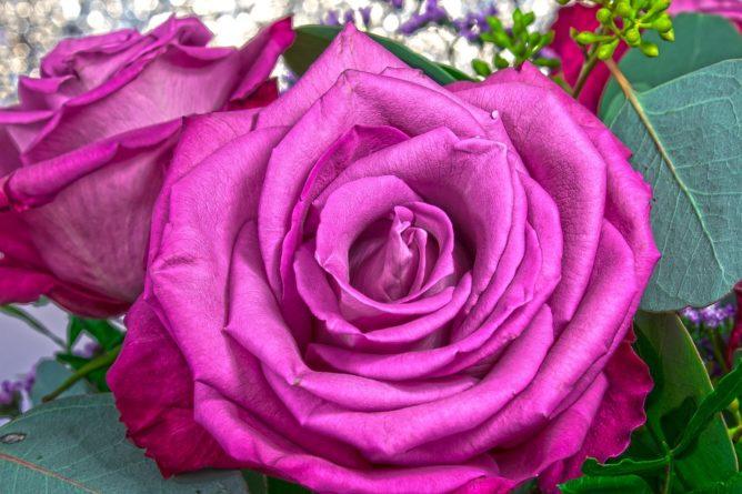Kouzlo romantických růží a jejich mystická symbolika