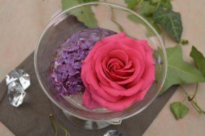rose-799506_1280