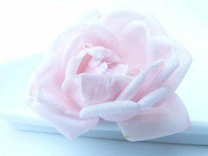 rose-91075_1280