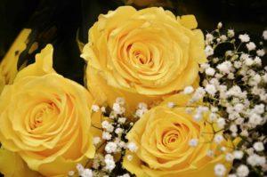roses-366172_1280