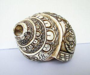 shell-1742539_1920