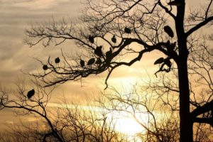 silhouette-170728_1280