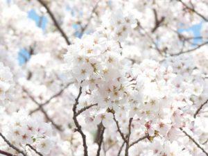 spring-302979_1280