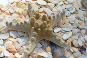 starfish-322620_1280-300x199