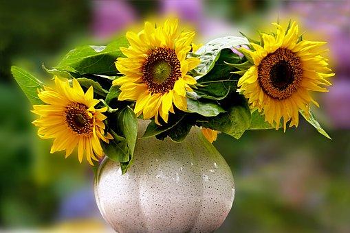 Slunečnice - květina indiánů