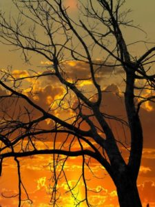 sunset-523917_1280