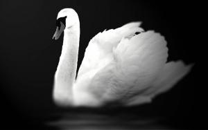 swan-605985_1280