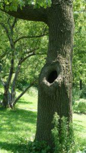 tree-165689_1280
