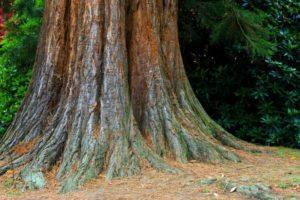 tree-220420_1280