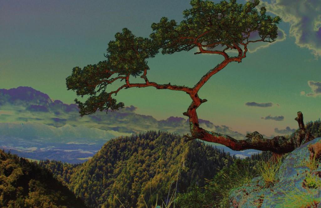 tree-708997_1920