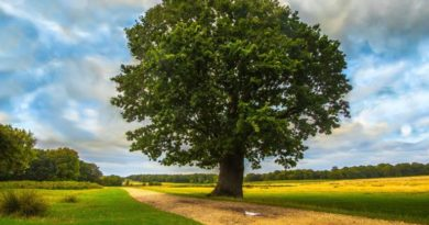 Lesní rituál - meditace v přírodě