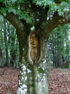 tree-face-167490_1920