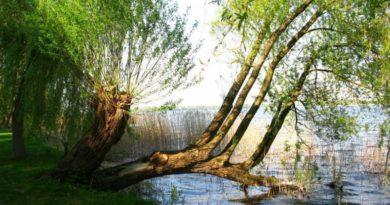 Uklidňující meditace pod vrbou