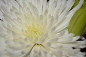 wildflower-222603_1280