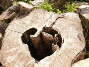 wooden-heart-293374_1280