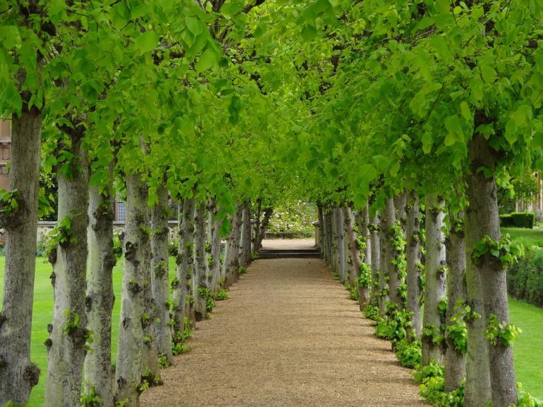 Co je to strom? Spirituální přírodní bytost?