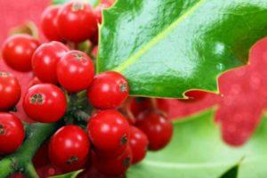 berry-2389_1280