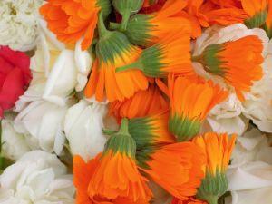 carnations-423284_1280-300x2251-300x225