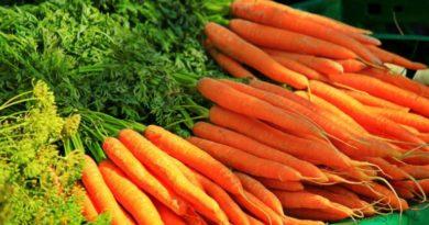 Karotela - základ pomerančového džusu