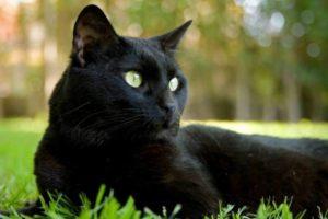cat-418116_1280