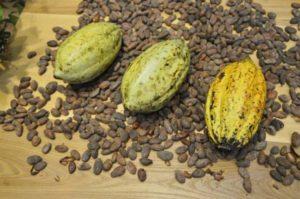 cocoa-beans-373813_1280