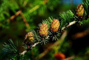 cones-614960_1280
