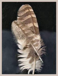 feather-317828_1280