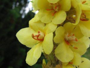 flower-1143302_1280