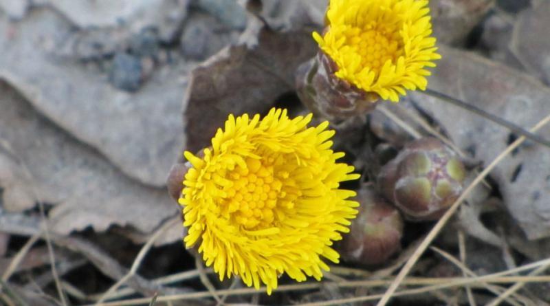 flower-301278_1920