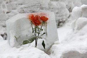 flower-620702_1280