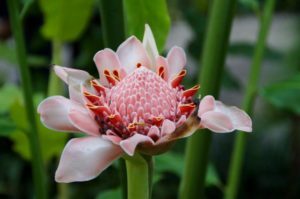 flower-985910_1920