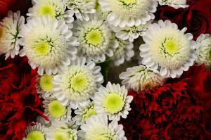 flowers-20369_1280