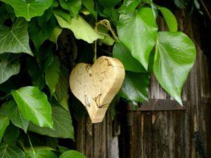 heart-284830_1280