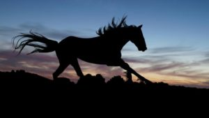 horse-654840_1280