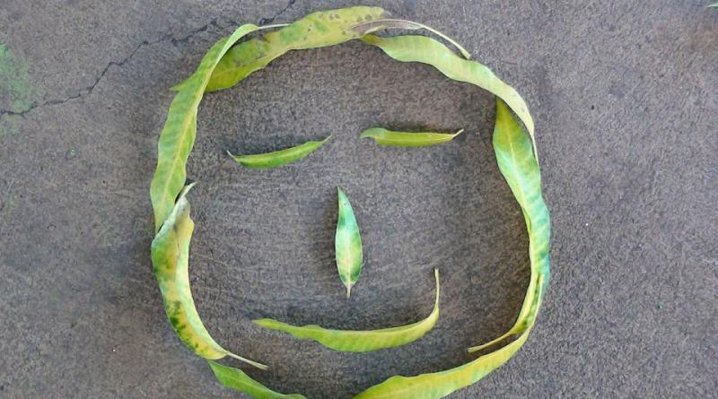 leaves-493030_1280
