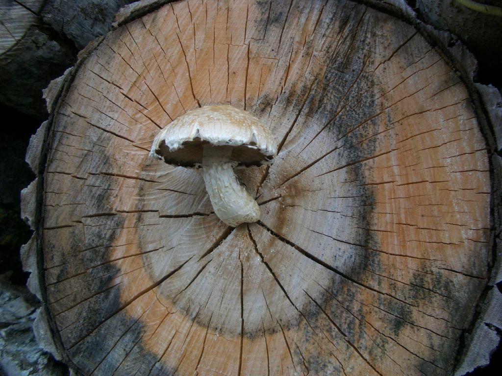 mushroom-214313_1280