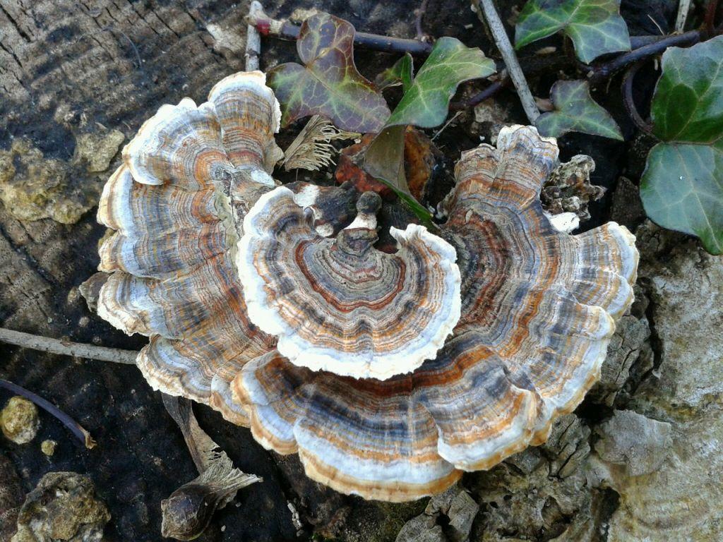 mushroom-312981_1280