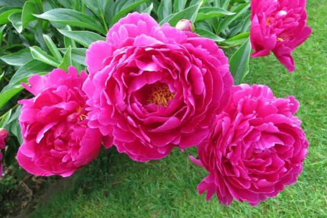 Čarodějné byliny a květiny