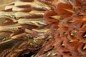 pheasant-617632_1280