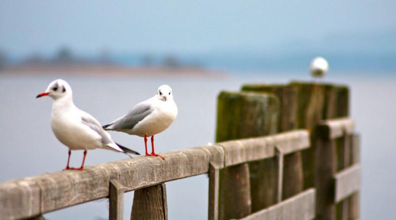 seagull-562434_1280