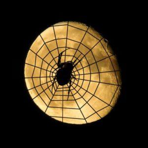 spider-975401_1280