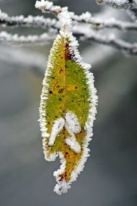 winter-550915_1280