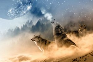 wolves-1400819_1920