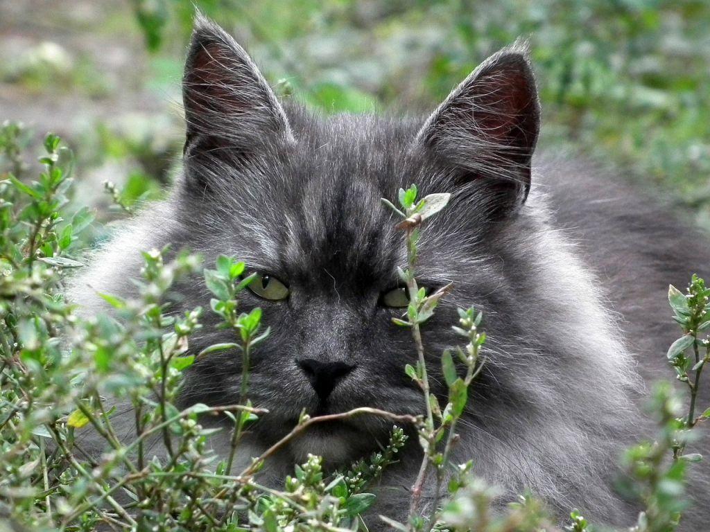 cat-194858_1280