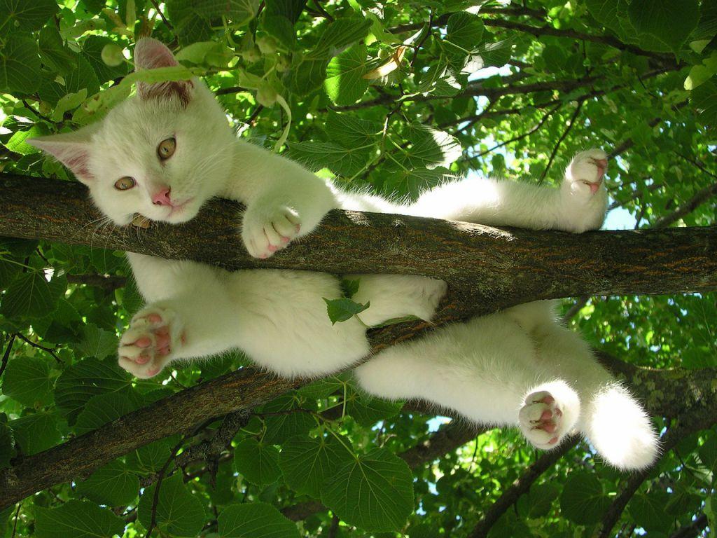 cat-212703_1280