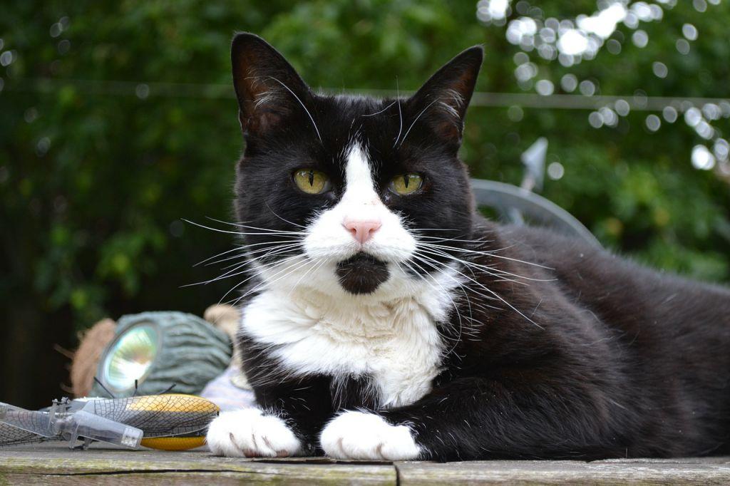 cat-274515_1280