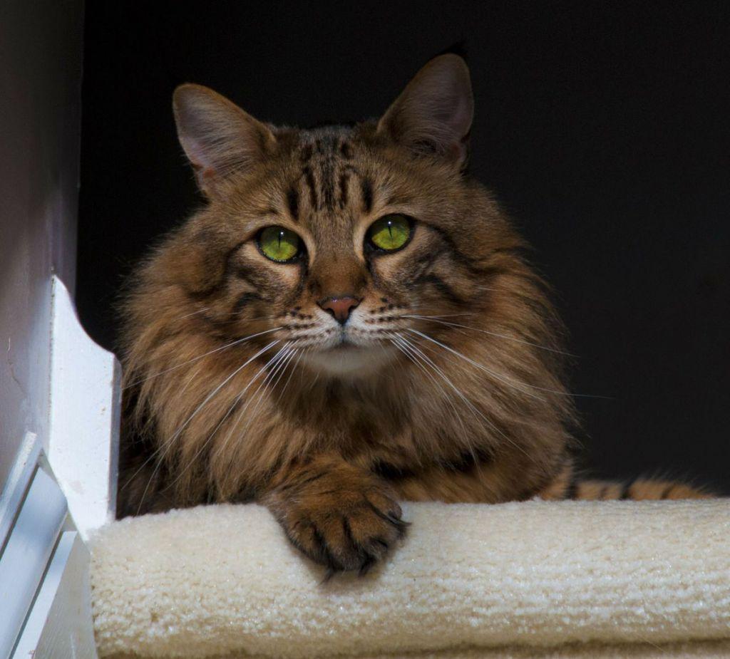 cat-301183_1280