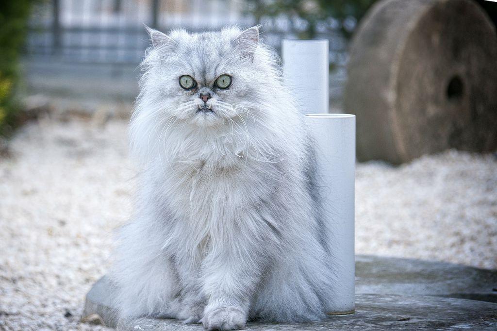 cat-301458_1280