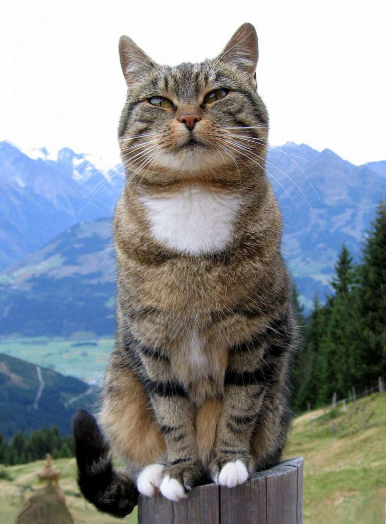 cat-369205_1280