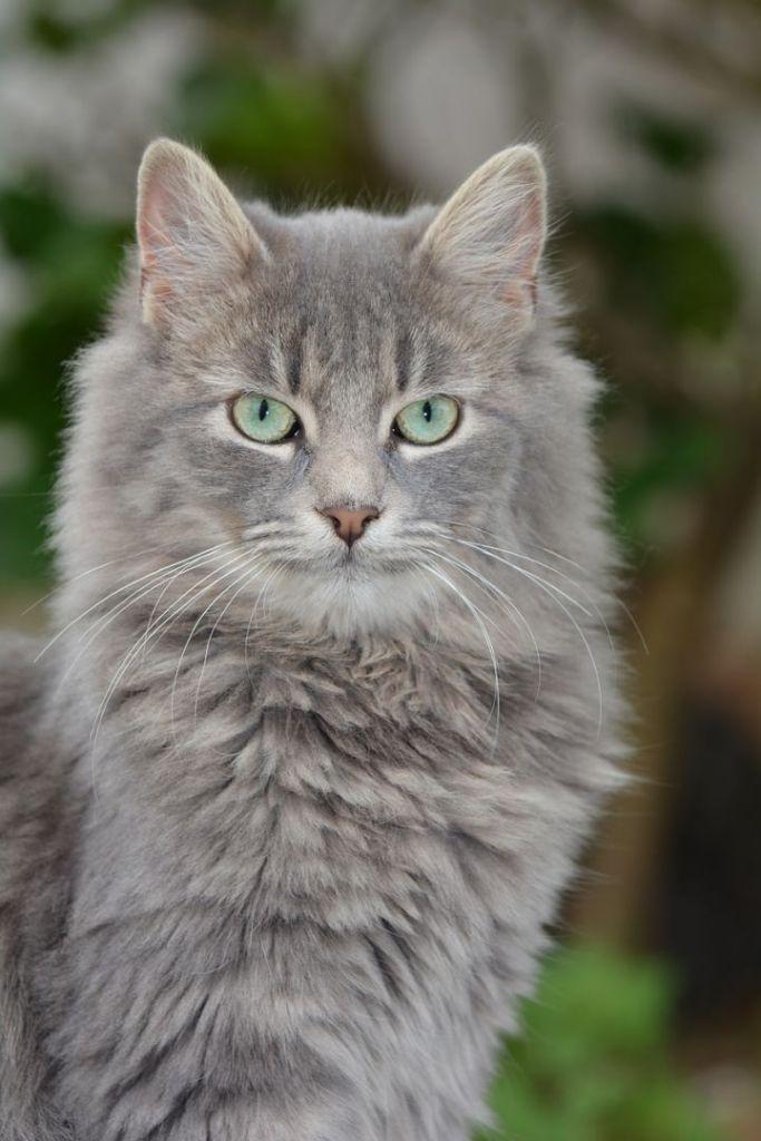 cat-436315_1280